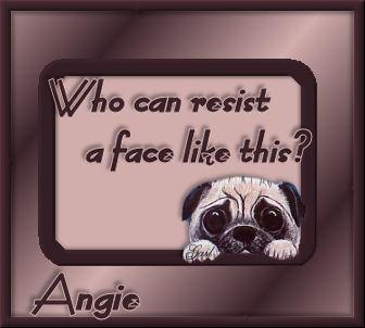 Angie-gailz0506-pug.jpg