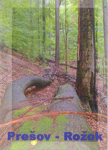 2007 PRIMEVAL BEECH FORESTS 03