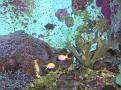 2007 Toledo Zoo 067
