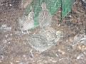 2007 Toledo Zoo 038