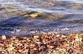 lots of fallen leaves
