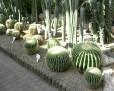 Vystava kaktusu 2005 (13)