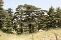 84-bcharre-rezerwat cedrow-img 9487