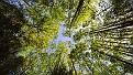 forest-wallpaper-1920x1080-119