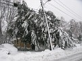 Snowstorm 2-6-2010 (12)