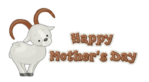 Happy Mother's Day - BighornSheep