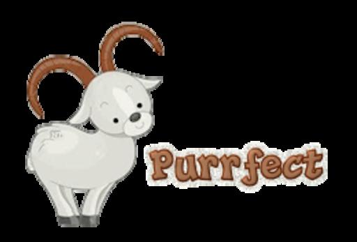 Purrfect - BighornSheep