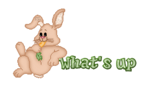 What's up - BunnyWithCarrot