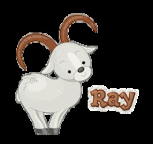 Ray - BighornSheep