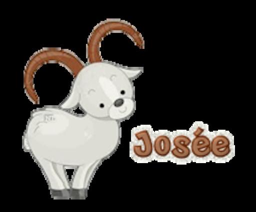 Josee - BighornSheep