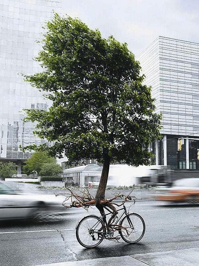 Biking tree :-)
