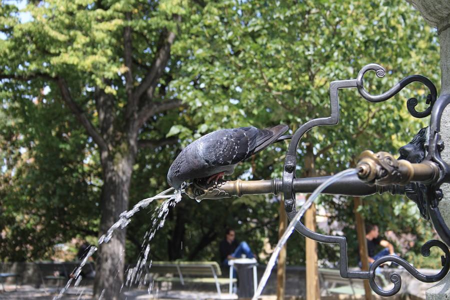 http://images52.fotki.com/v1566/photos/2/243162/7891715/ZurichComo34-vi.jpg