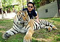 030) Daiju with adult tiger