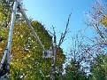 Trees 029