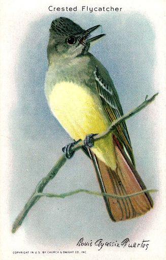 1938 Useful Birds of America Series 10 #03 (1)