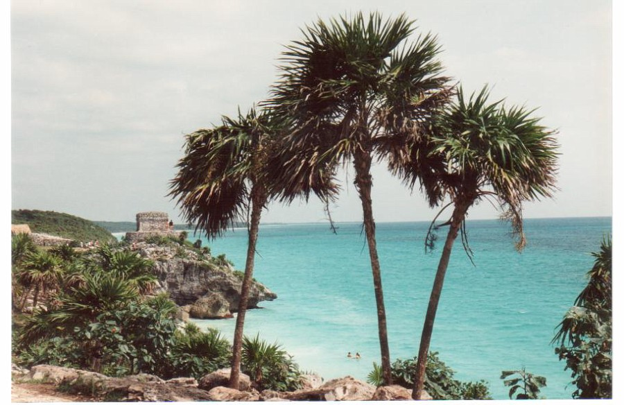 The palms at the Mayan ruins of Tulum, Mexico