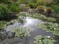 LA Arboretum - Tallac Knoll3
