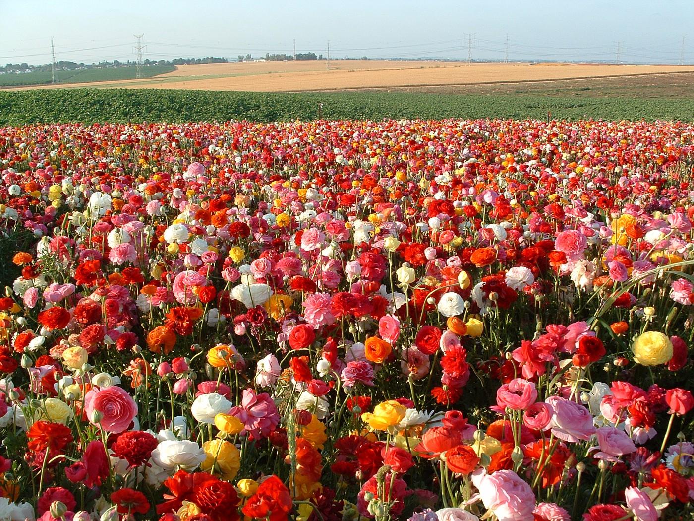 древности территорию картинки израильские цветы знаете, что флора
