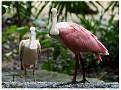 Фауна Мексики