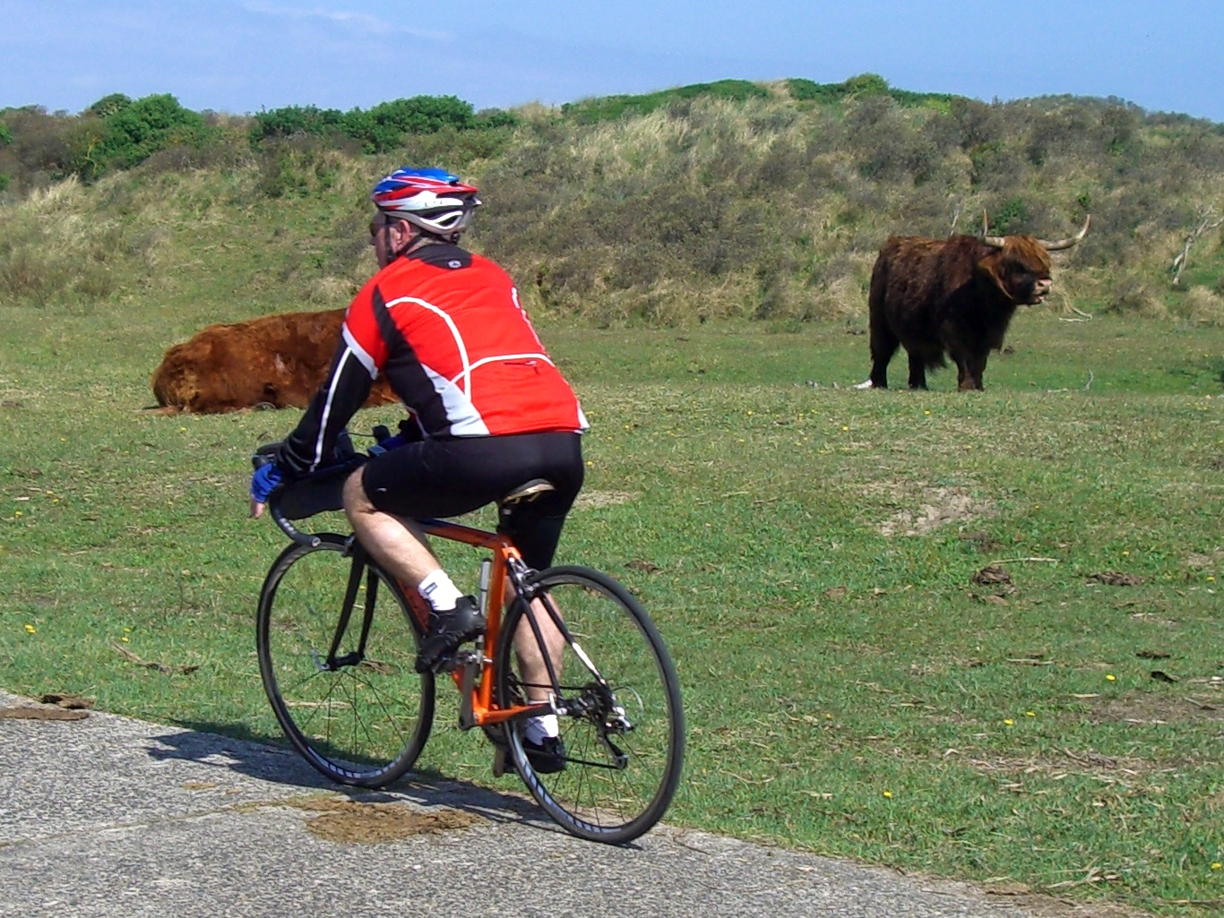 Bisons at the cycle track