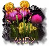 Andy - 3094