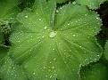 Dew on the leaf
